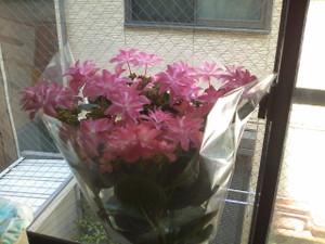 20120513_ajisai
