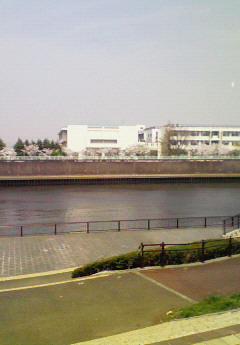 今日の隅田川沿い